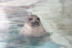 Smiling seal Royalty Free Stock Photos