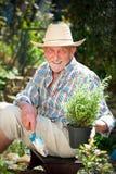 Smiling senior man in the garden Stock Images