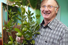 Smiling senior man looking after houseplant lemon. Portrait of a smiling senior man looking after houseplant lemon and proud of its growth Stock Images