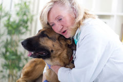 Smiling senior veterinarian hugging German shepherd  dog Royalty Free Stock Photography