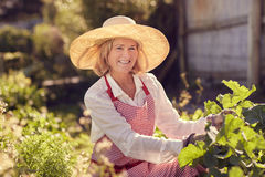 Smiling senior woman checking on her vegetable garden Royalty Free Stock Photo