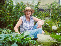 Smiling senior woman gardening among the flower beds Stock Images