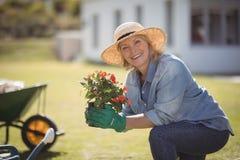 Smiling senior woman holding sapling plant in garden Royalty Free Stock Photos