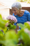 Smiling senior woman smelling pink hydrangea bunch Stock Photo