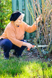 Smiling senior woman working in garden Royalty Free Stock Images