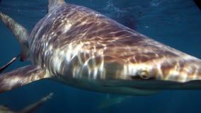 Smiling shark in ocean Stock Image