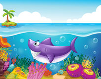 A smiling shark under the sea with corals Stock Photos