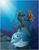 A smiling shark under the sea near the rocks Stock Images