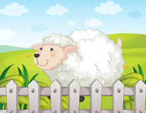 A smiling sheep Royalty Free Stock Image