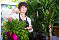 Smiling shop assistant offering basket with fern Royalty Free Stock Photos