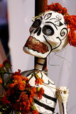 Smiling skull I Stock Photo