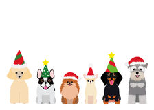 Smiling small dogs with Christmas party hat Royalty Free Stock Photos