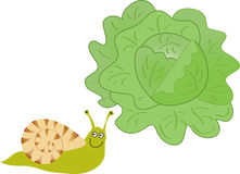 Smiling snail and lettuce Stock Photo