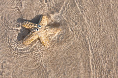 Smiling starfish on sand with clear sea Stock Images
