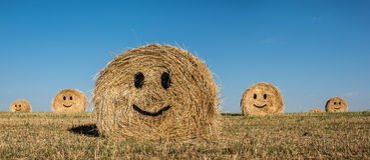 Smiling straw bale. Stock Photo