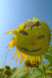 Smiling of Sunflower blooming Royalty Free Stock Photo