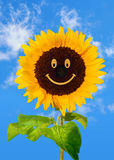 Smiling sunflower on blue sky Stock Photo