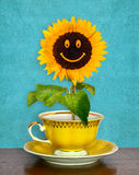 Smiling sunflower in a cup. Symbol of fun and happynes stock image
