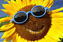 Smiling sunflower Royalty Free Stock Photography