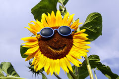 Smiling sunflower with sunglasses Royalty Free Stock Image
