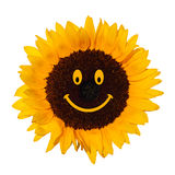 Smiling sunflower. Symbol of fun and happynes stock photo