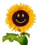 Smiling sunflower. Symbol of happynes stock photos