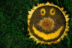 Smiling sunflower Stock Photos