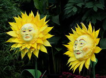 Smiling Suns Or Sunflowers. Against a leafy background Stock Image