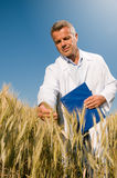 Smiling technician controls wheat field Royalty Free Stock Photography