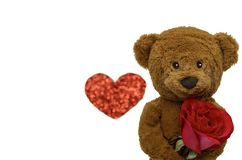 The smiling teddy bear holding red rose. stock images