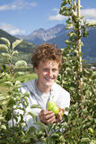 Smiling teenager presenting apples Royalty Free Stock Photography