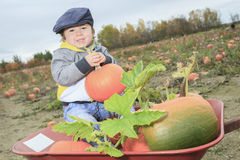 Smiling toddler boy with pumpkin on cold autumn Royalty Free Stock Image