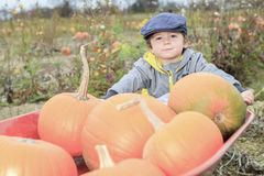 Smiling toddler boy with pumpkin on cold autumn Stock Images