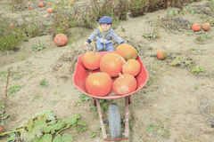 Smiling toddler boy with pumpkin on cold autumn Stock Photography