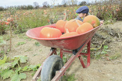 Smiling toddler boy with pumpkin on cold autumn Stock Photos