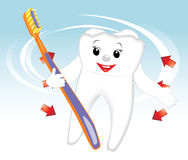 Smiling tooth with toothbrush. Cartoon Royalty Free Stock Image