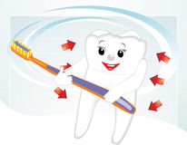 Smiling tooth with toothbrush. Cartoon Stock Photos