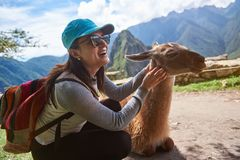 Smiling tourist woman with lama. In Machu Picchu hiking travel. Happy girl in nature with alpaca Stock Images