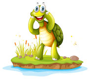 A smiling turtle in an island Royalty Free Stock Photography