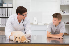 Smiling vet examining a dog with its owner Royalty Free Stock Photo