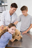 Smiling vet examining a dog with its owners Stock Images