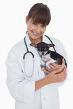 Smiling vet holding a cute chihuahua Royalty Free Stock Photos