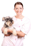 Smiling vet holding a cute dog Stock Image