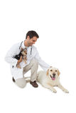 Smiling vet posing with yorkshire terrier and yellow labrador Royalty Free Stock Photo