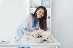 Smiling veterinarian doctor examining cute white dog in clinic. Beautiful smiling veterinarian doctor examining cute white dog in clinic Royalty Free Stock Images