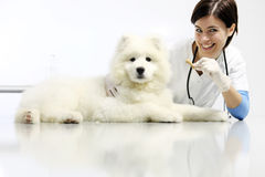 Smiling Veterinarian with dog and food, on table in vet clinic, Royalty Free Stock Photo