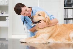 Smiling veterinarian examining a cute dog Stock Photo