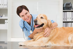 Smiling veterinarian examining a cute dog Royalty Free Stock Photo
