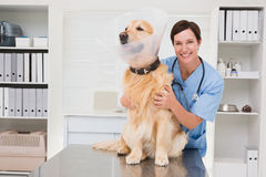 Smiling veterinarian examining a cute dog Stock Images