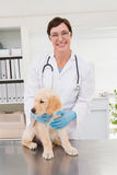 Smiling veterinarian examining a cute dog Stock Image